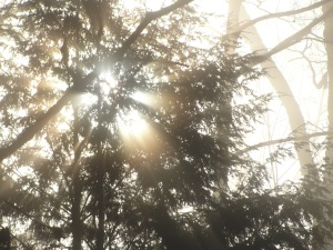 Sun in Trees DSC05525