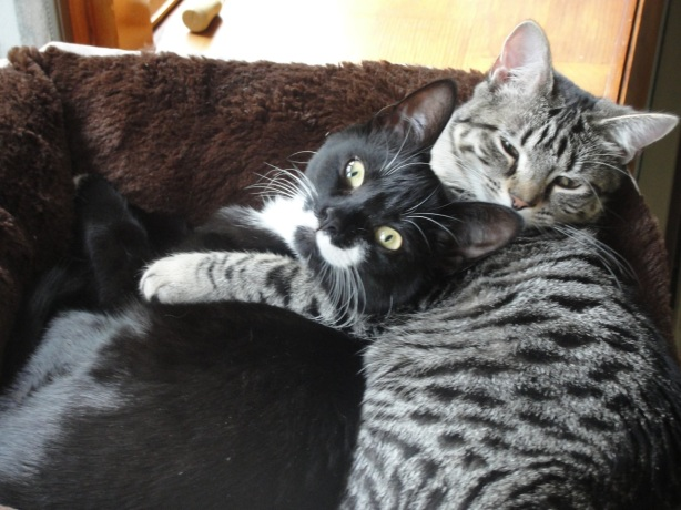 Cats Cuddle