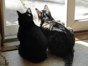 Cats facing Window DSC03590