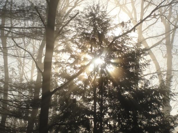Light in Hemlock