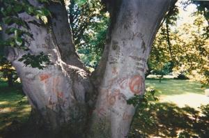 Beech Tree Perch 133650003