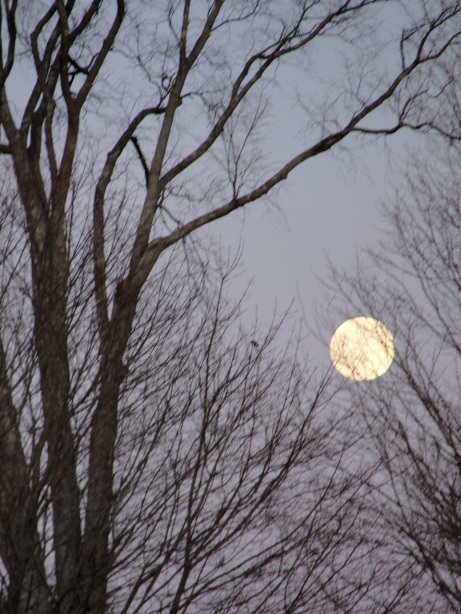 Moon in branches DSC02496