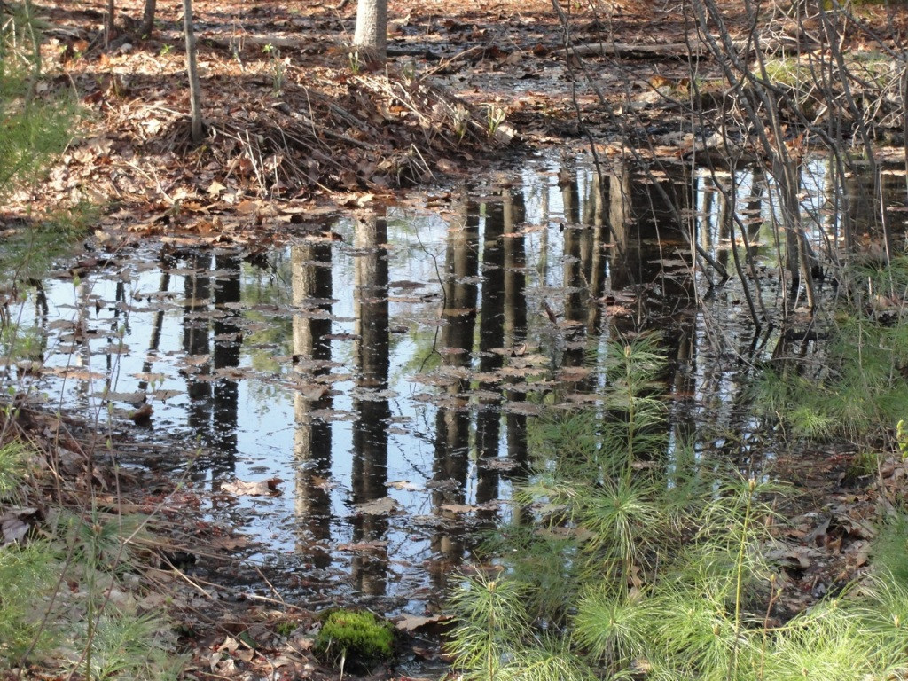 Tree Reflection DSC03816