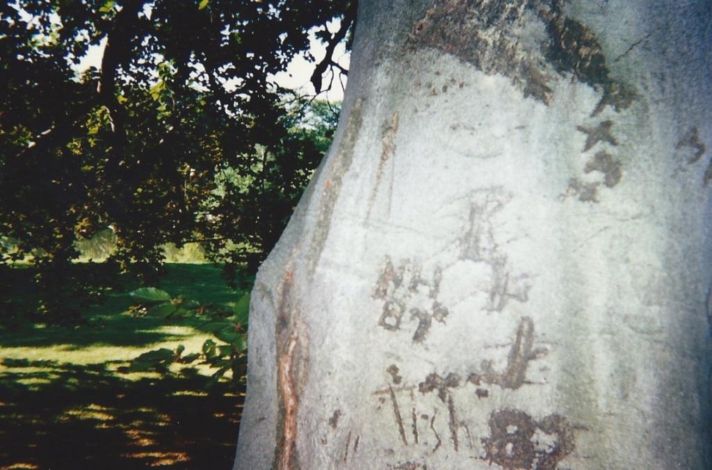 Beech Tree Markings 133650002