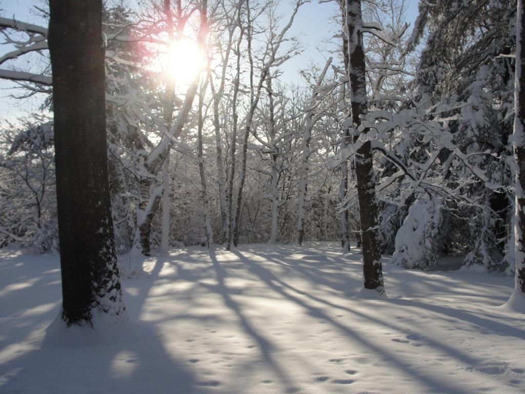 Sun and Snow DSC06016