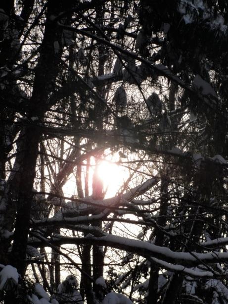 Sun in branches DSC01449