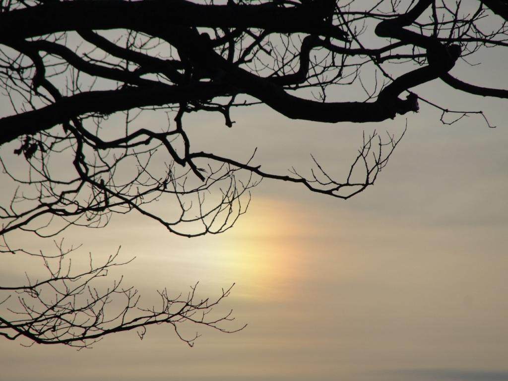 Rainbow in Branches DSC03269