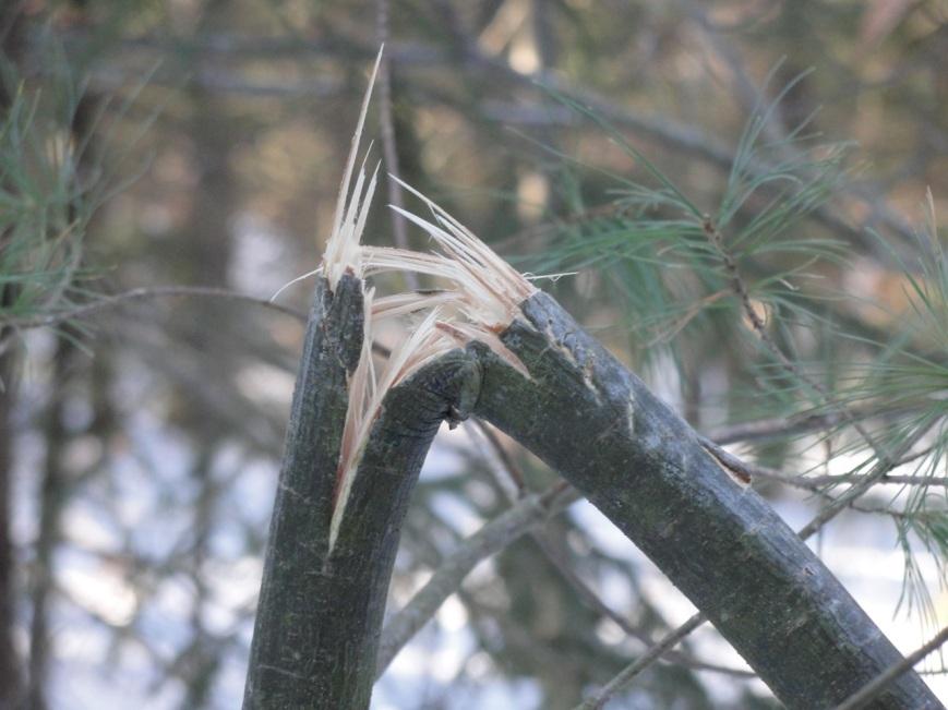 Broken Tree DSC01792