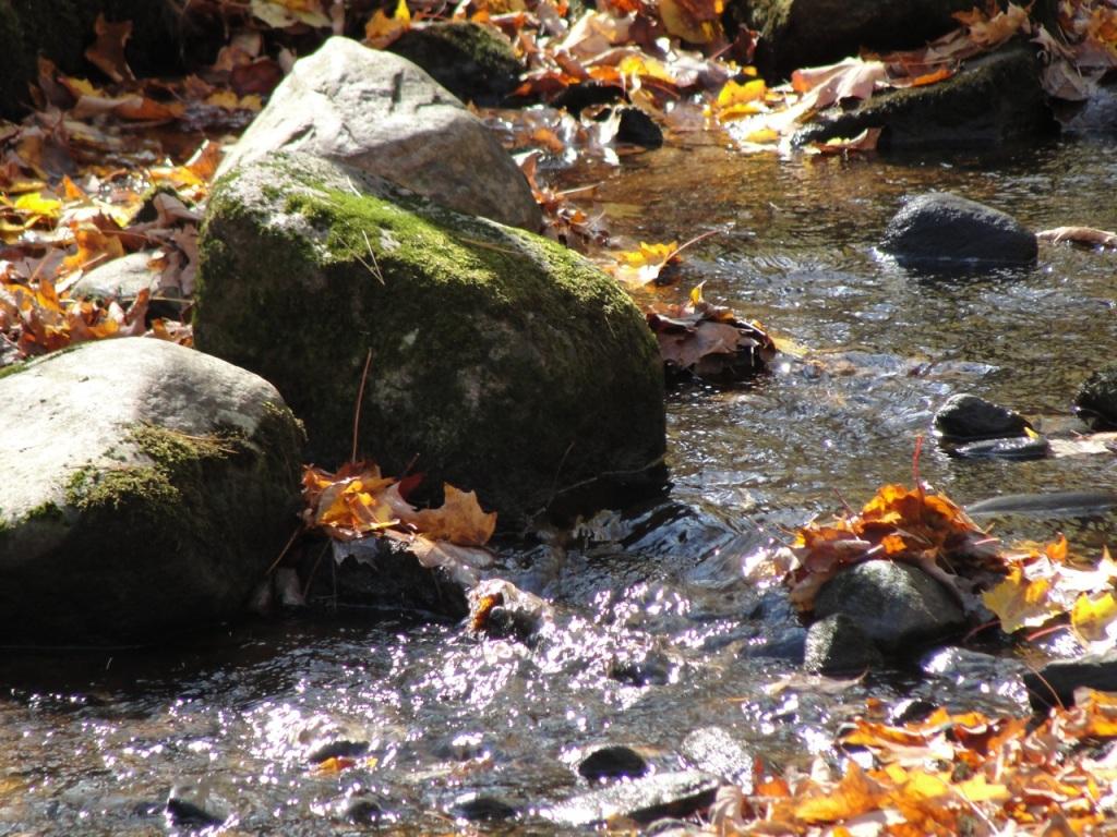 Creek DSC01248