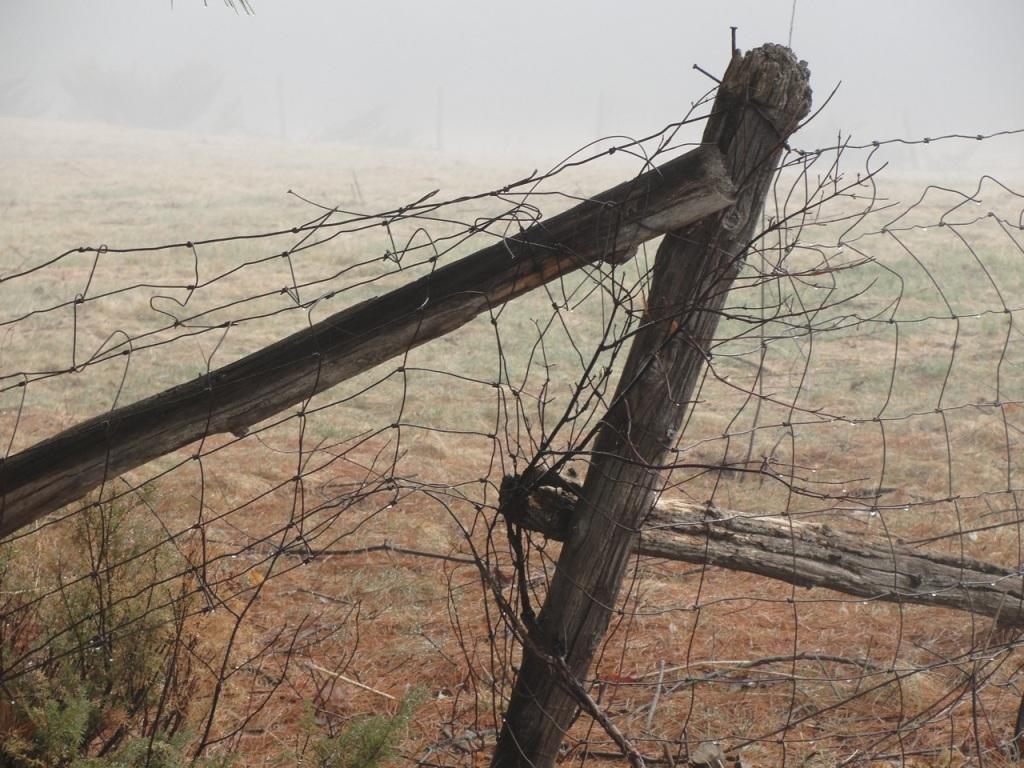 Fence DSC03309
