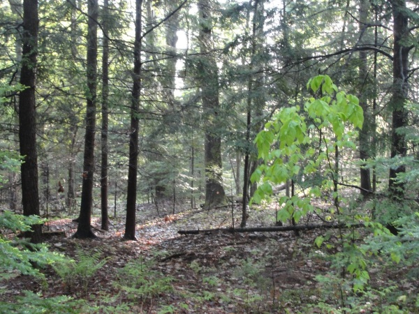 Trees MJ DSC03686
