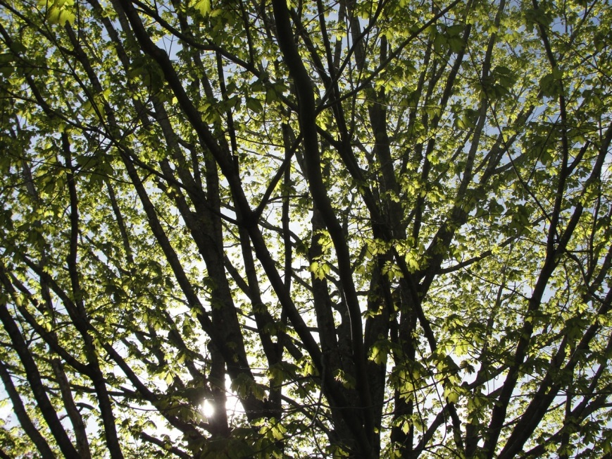Branches MJ DSC03740