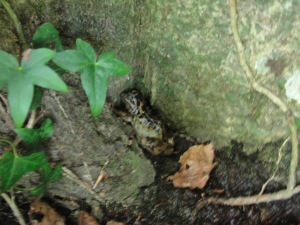 Toad or Frog MJ DSC08139