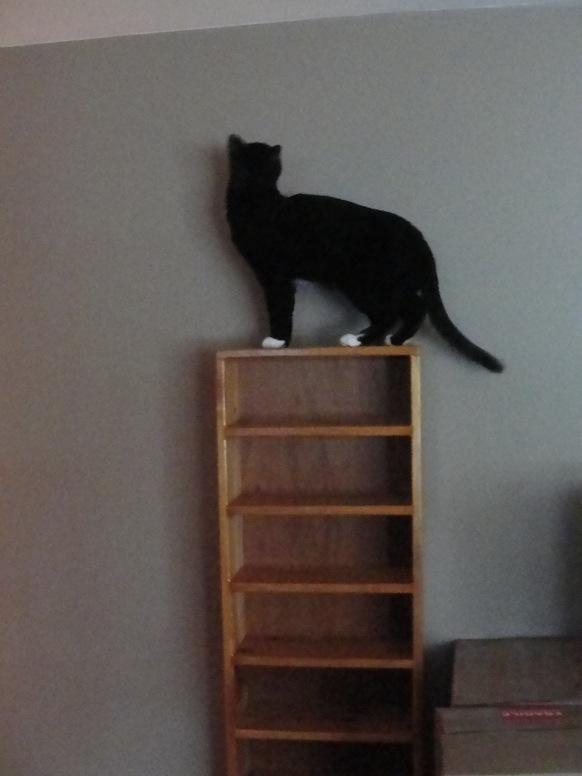 Cats Explore