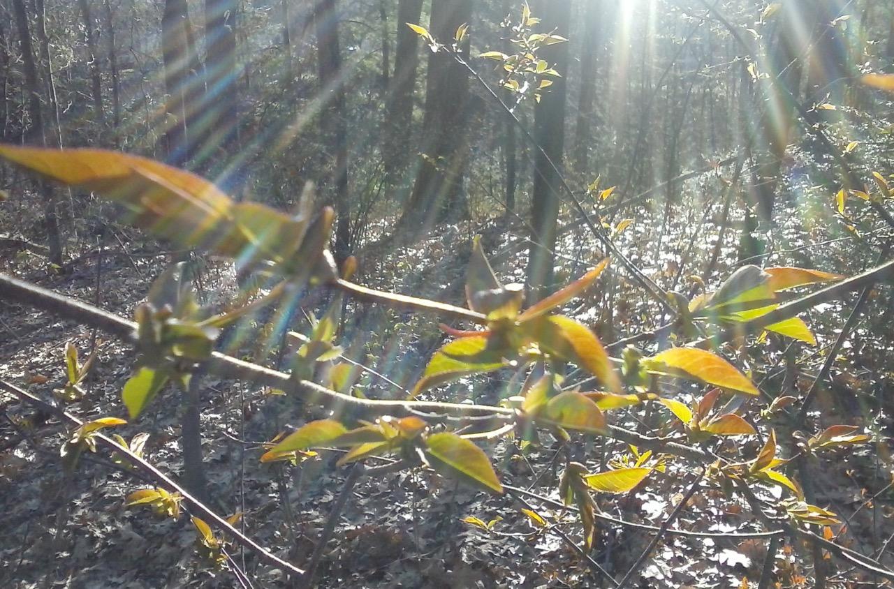 Solar Energy Leaves