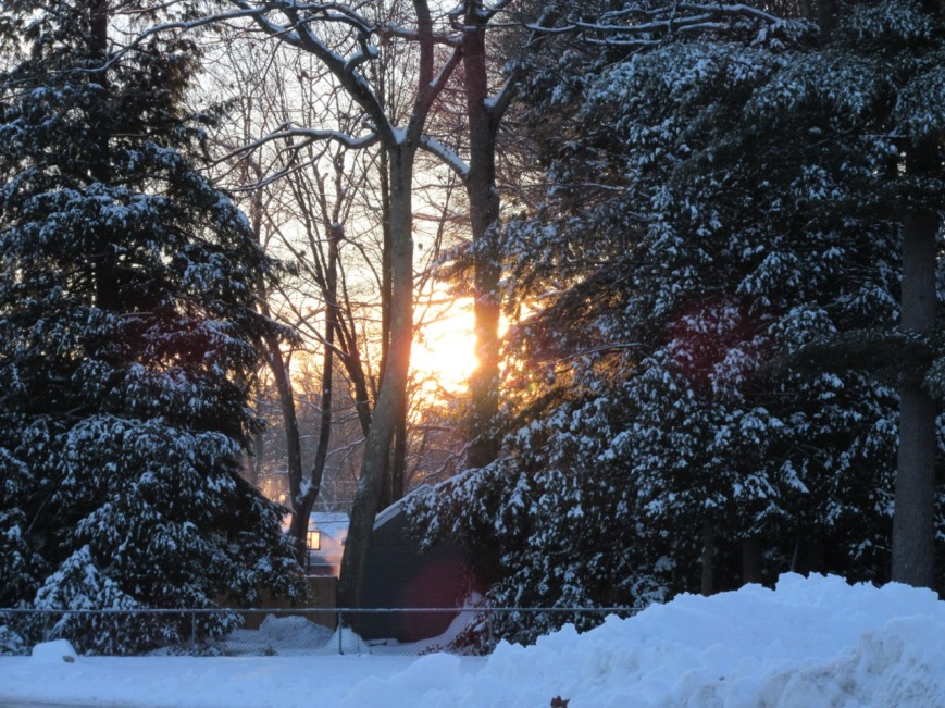 Sun through evergreens