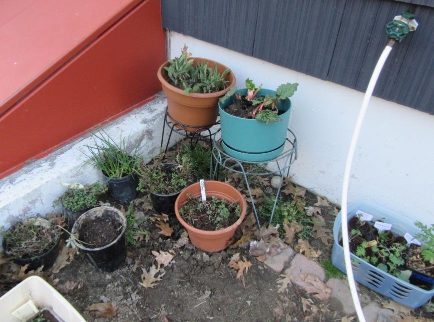 Plant Nursery – Version 2