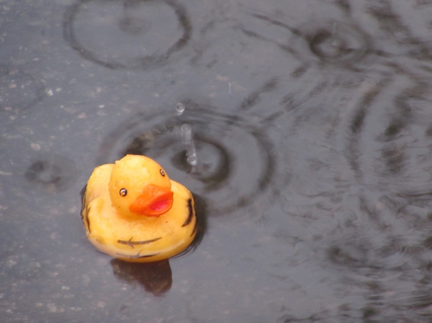 Rubber duck in puddle