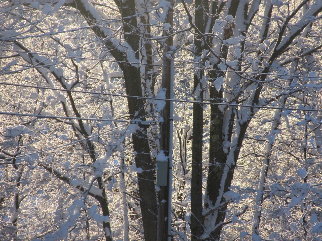 Snow sun beauty