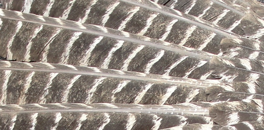 Bird Wing closeup