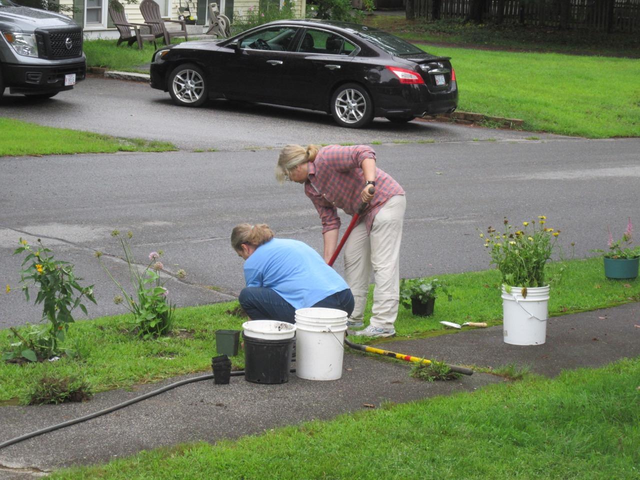 Planting the roadside strip