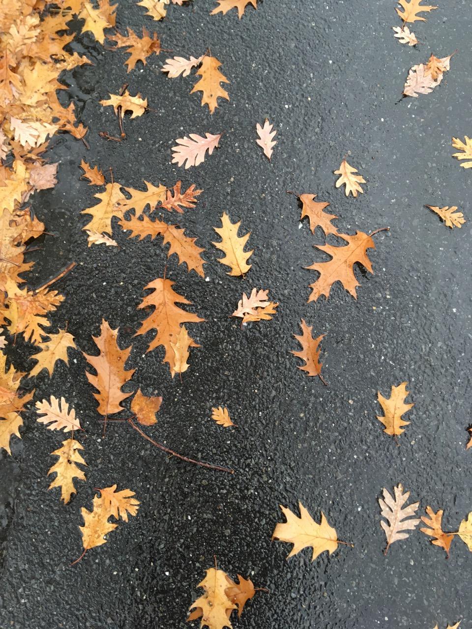 White Oak and Red Oak Leaves