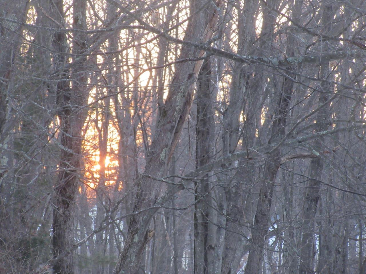 Sunrise in trees