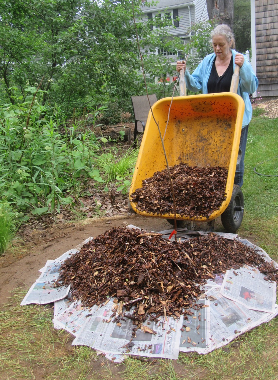 Myke adding wood chips to mulberry
