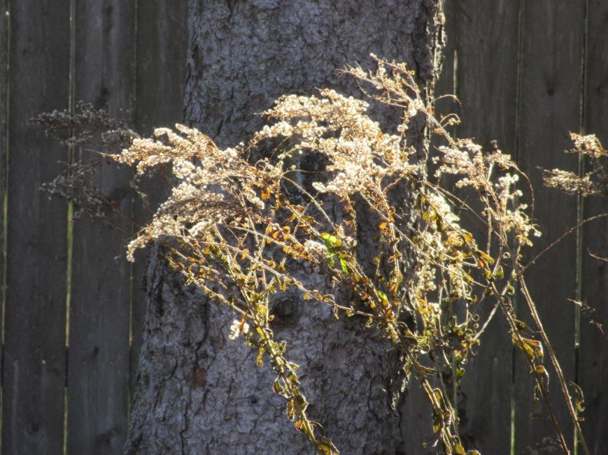 Sunlight on wildseeds