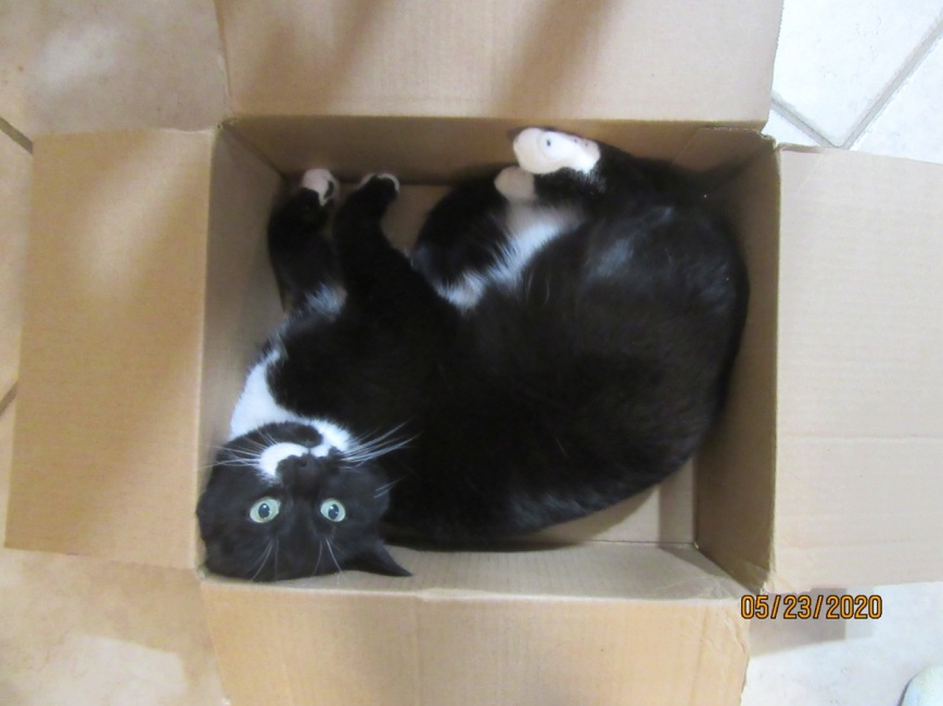 Cat in a box 3