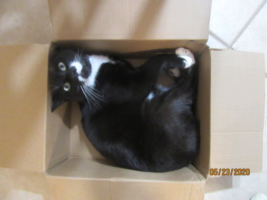 Cat in a box 4