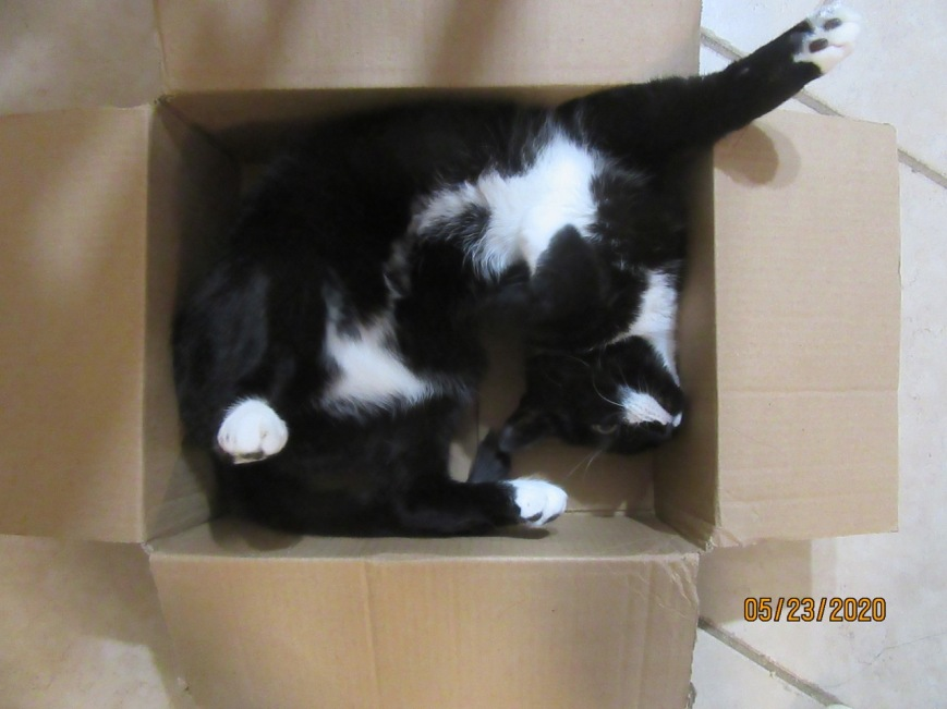 Cat in a box 6
