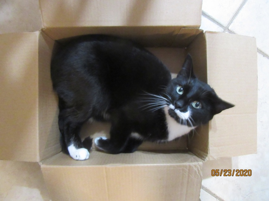 Cat in a box 7
