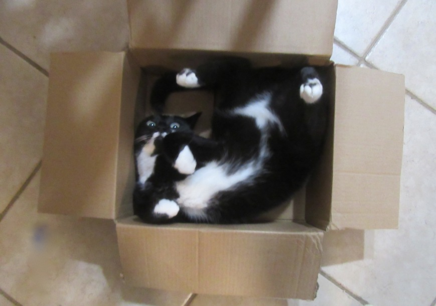 Cat in a box 8
