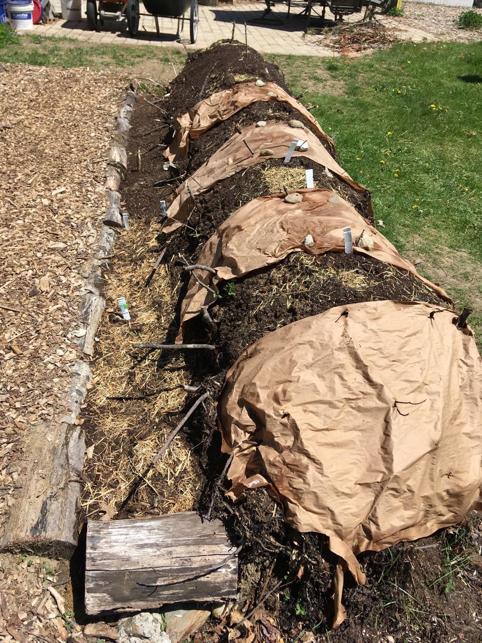 Hugelkulture planting