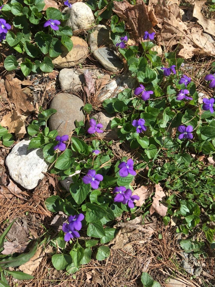 Stones & violets